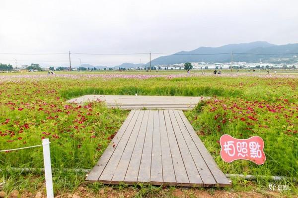 ▲新社花海。(图/好景点提供)