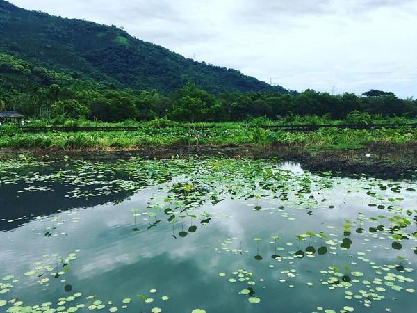 ▲马太鞍湿地生态园区。(图/网友提供,请勿随意翻拍,以免侵权。)