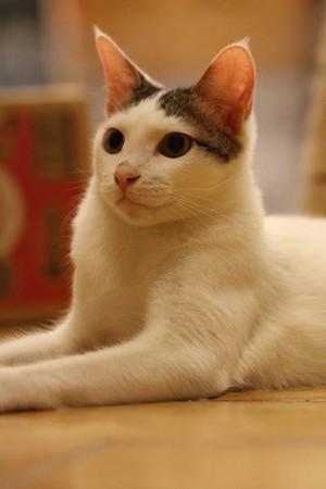 ▲猫吐司堡专卖店。(图/猫吐司堡专卖店提供)